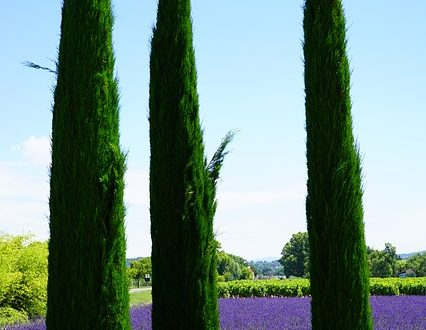 cypress_image by Hans on pixabay