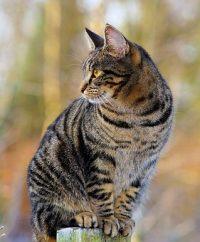 Katze_pixabay-Kapa65