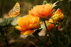 Schönheit-Bild von Larisa Koshkina auf pixabay