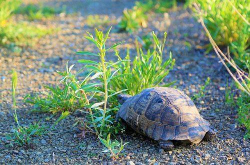 Schildkröte-Bild von Konevi auf pixabay
