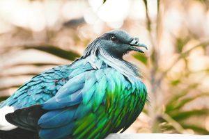 Taube-Bild von Free-Photos auf pixabay
