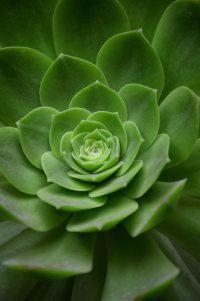 Pflanze-Bild von Miguel Á. Padriñán auf Pixabay