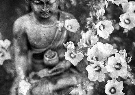 ajna-cakra, Bild von Benjamin Balazs auf pixabay