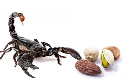 Skorpion-Bild von Ali Pixalli auf pixabay
